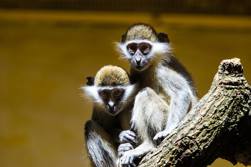 «Зоопарк 12 місяців»