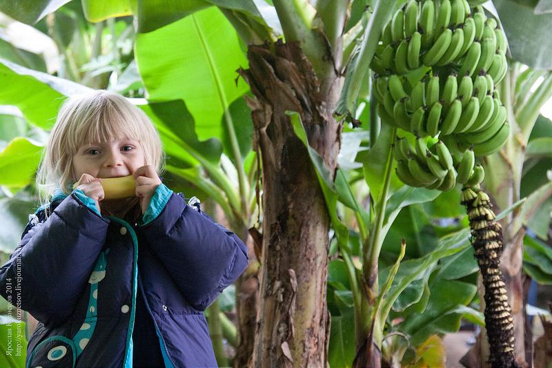 Бананова Ферма