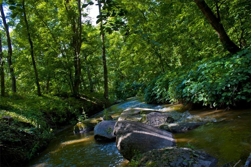 Tricrat forest