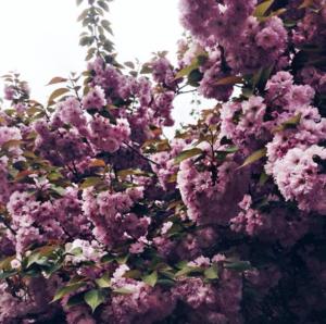 Избавиться от усталости за три дня в Закарпатье: релакс-тур на майские праздники