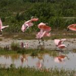 9 парков Украины, куда едут не только за природой и красивым ландшафтом