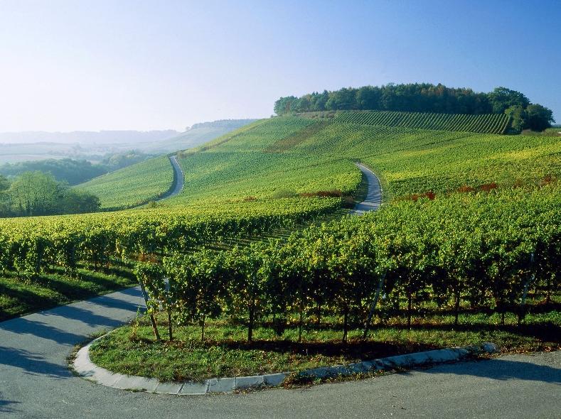 Центр культуры вина Шабо (2)