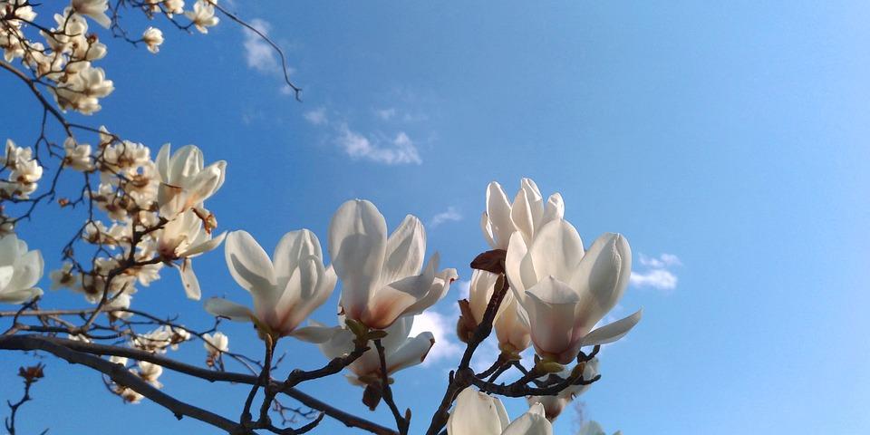 Куди поїхати весною в Україні, щоб насолодитися красою природи