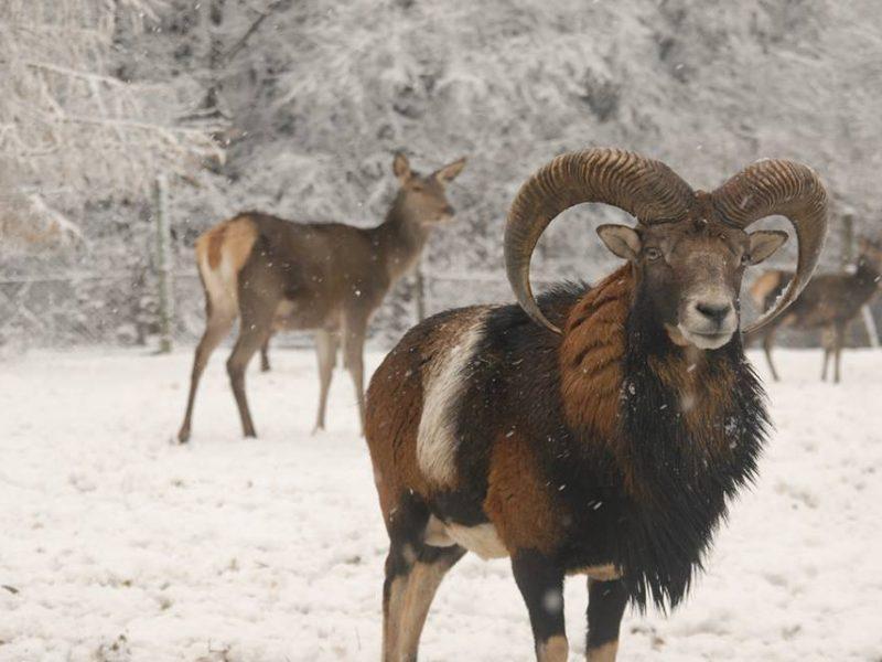 """Де в Україні відкрився """"Казковий ліс"""" з бабою Ягою та звірами"""