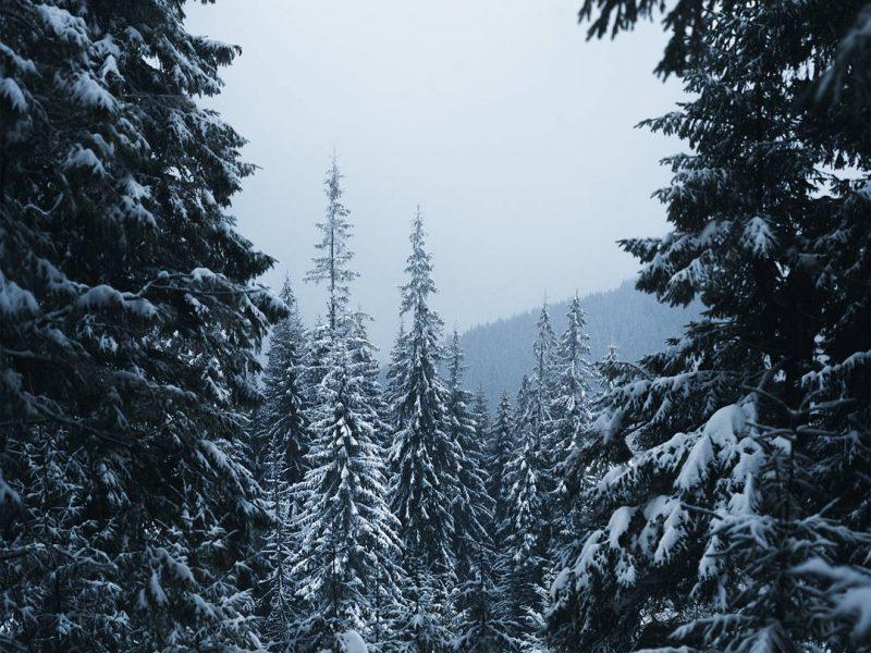Украинский фотограф показал как выглядит зима в Карпатах (фото)