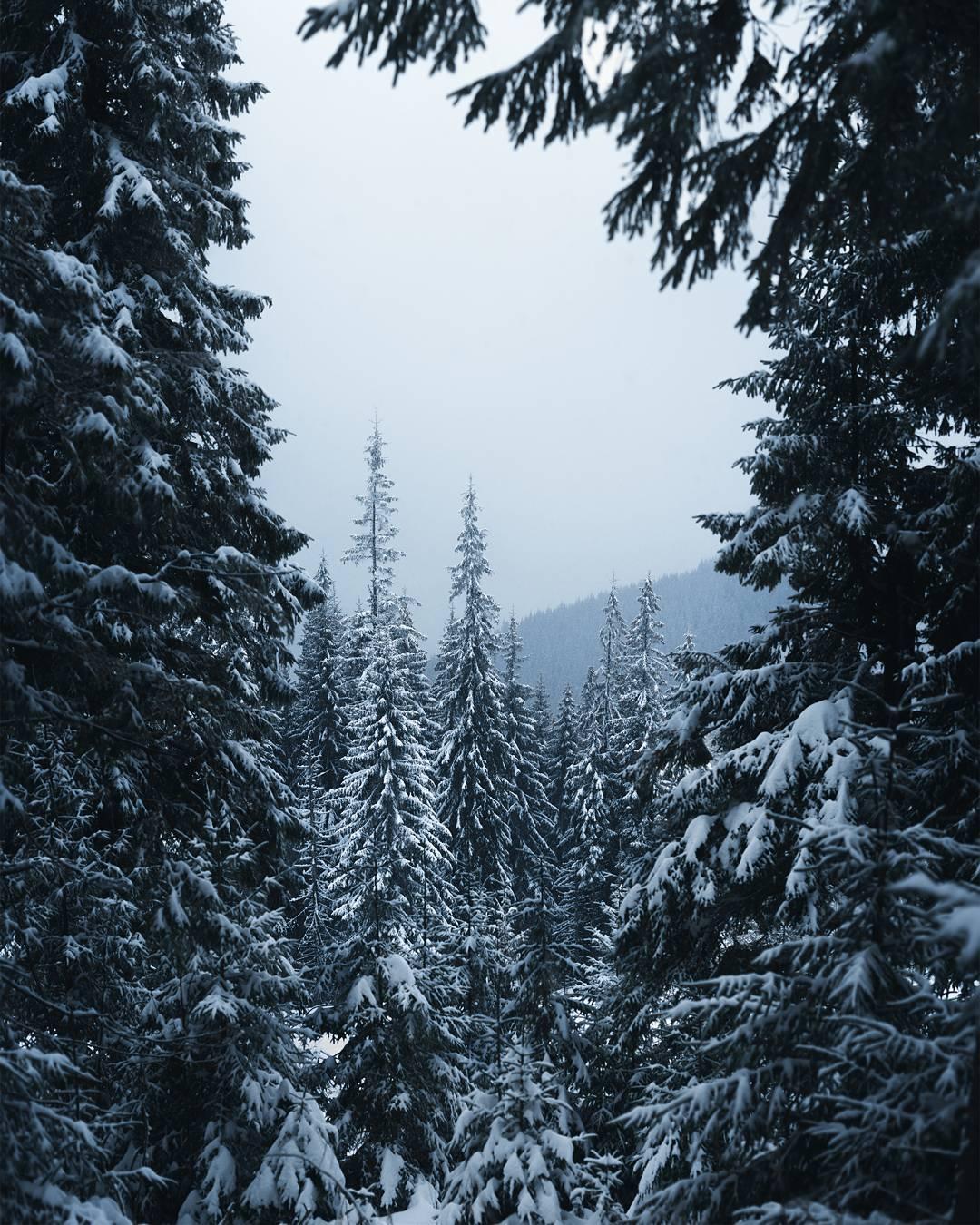 Український фотограф показав як виглядає зима в Карпатах