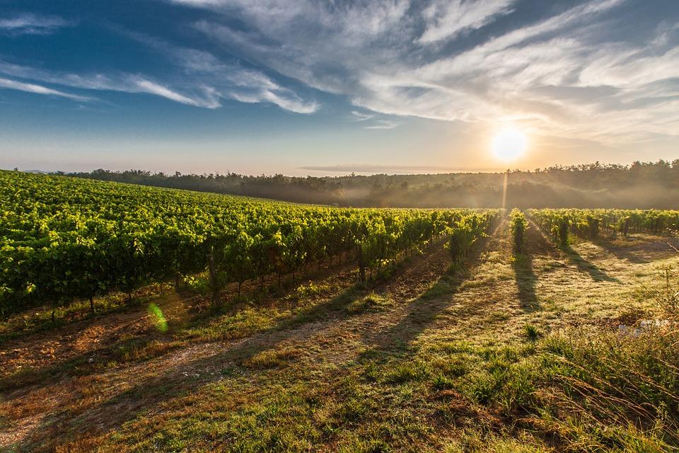 Українські виноробні: де продегустувати та купити справжнє вино