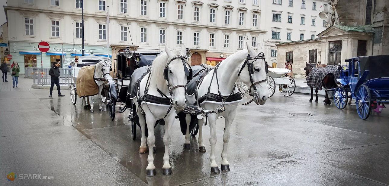 Повозка с белыми лошадями