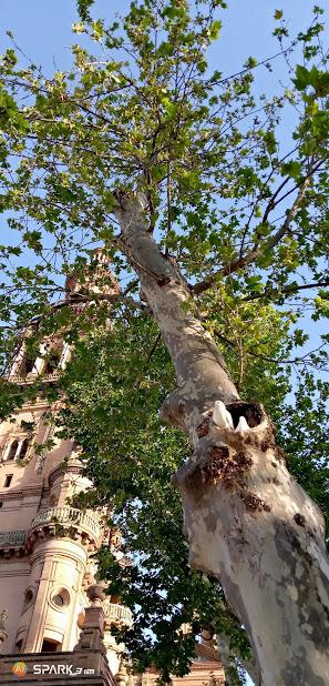 Дерево і замок