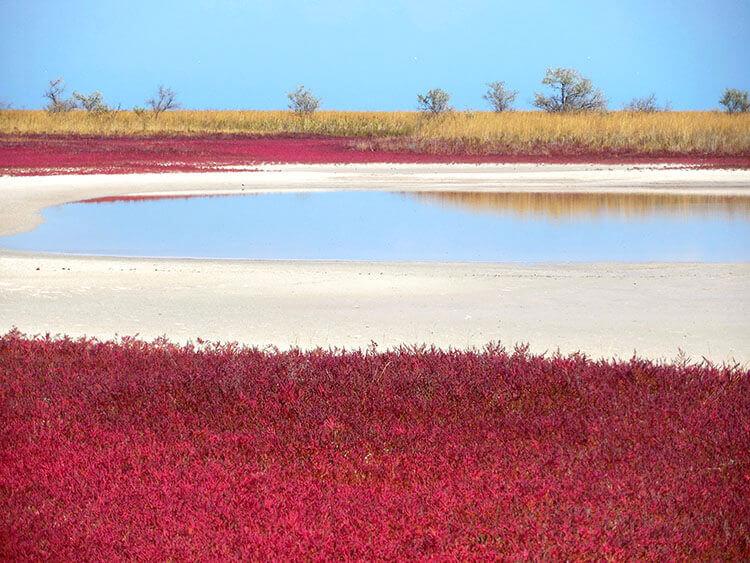 На косі червона трава