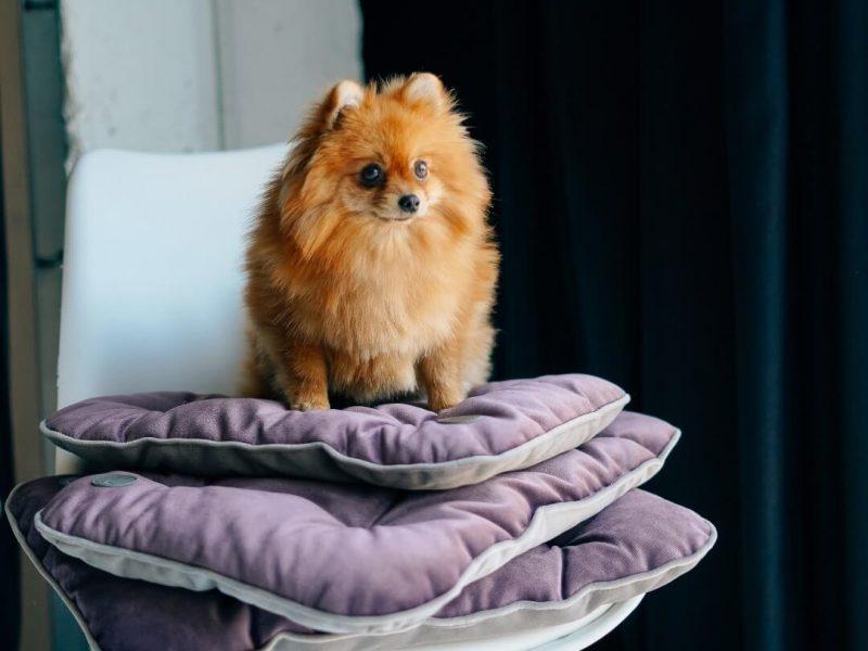 Собираетесь путешествовать? Не забудьте удобный коврик для собаки!